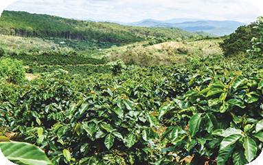 Cà phê Cầu Đất